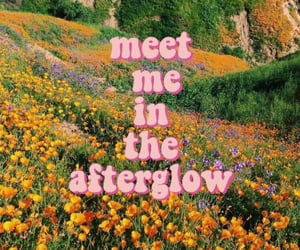 afterglow, aesthetic, and flowers image