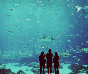 aquarium, fish, and blue image