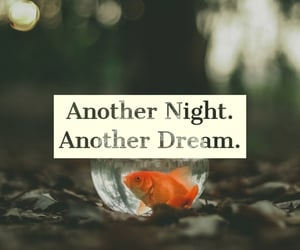 Dream, goodnight, and night image