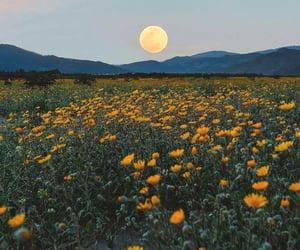 flowers, yellow, and moon image