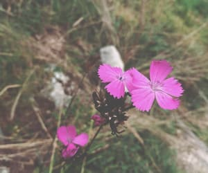 adventure, nature, and blume image