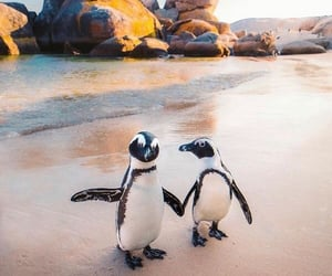 animal, penguin, and beach image