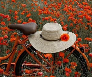 bycicles, flores, and flowers image