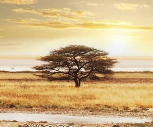 africa, sunrise, and golden hour image