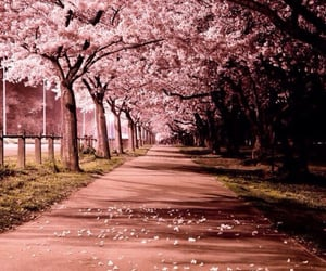 cherry blossom, floral, and flowers image