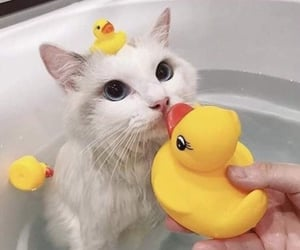 adorable, animal, and kitten image