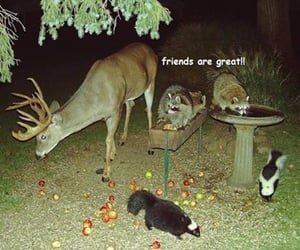 aesthetic, animals, and cute image
