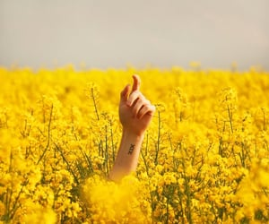 flowers, hand, and yellow image