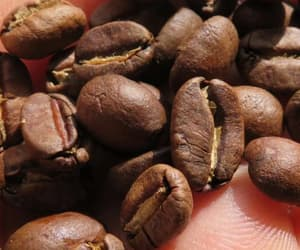 coffee, drink, and coffeebeans image