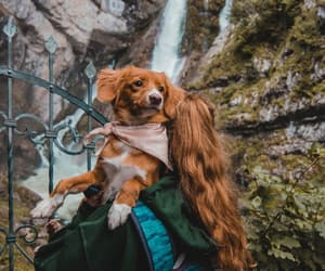 adventure, autumn, and beauty image