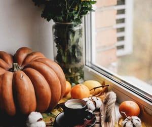 autumn, oranges, and pumpkins image