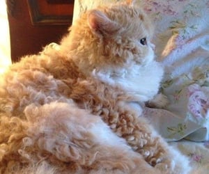 cat, fab, and curls image