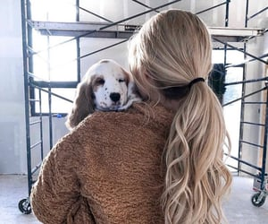 blonde, dog, and hair image