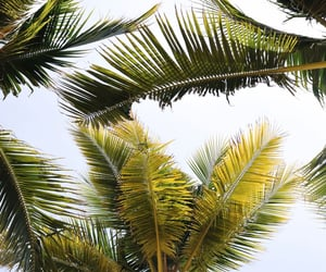 beach, holiday, and cali image