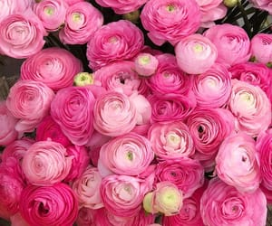 floral design, flowers, and pink image