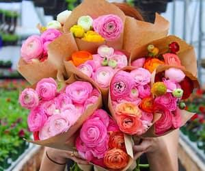flowers, gardening, and orange image