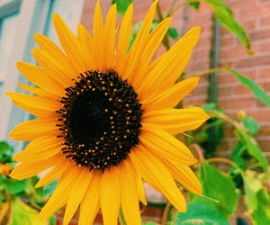 flowers, sunflower, and happy image