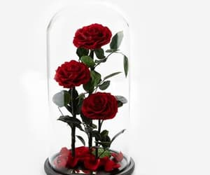 red rose, three piece, and timeless rose image