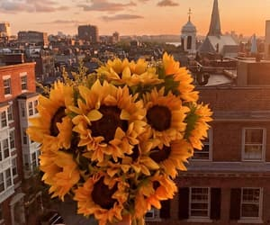 flowers, sunset, and yellow image