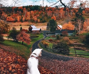 animal, fall, and autumn image