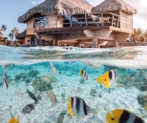 fish, beach, and ocean image