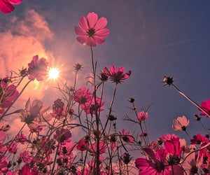 flowers, pink, and sun image