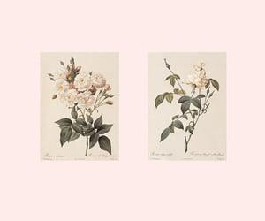 pastel roses image