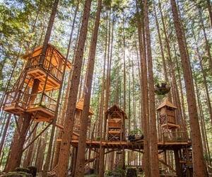 arboles, casas, and bosque image