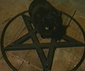 cat, black, and pentagram image