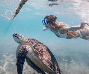 diving, sea, and turtles image