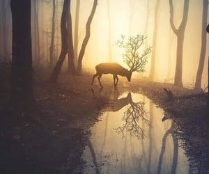 animals, sunset, and love image