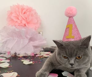 birthday, cat, and cats image