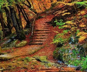 autumn, colorful, and forest image