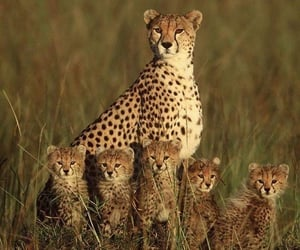 animals, family, and nature image