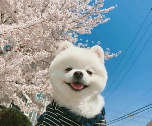 dog, cute, and aesthetic image