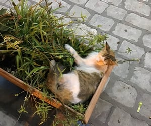 cat, kitten, and plant image
