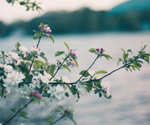 lake, nature, and spring image