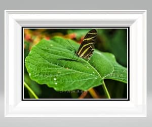 etsy, living room decor, and nature photography image