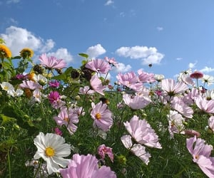 beauty, clouds, and flower image