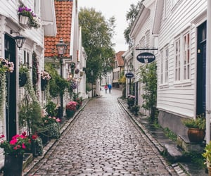 flowers, street, and city image