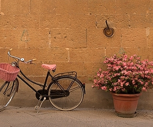 flowers, bicycle, and girl image