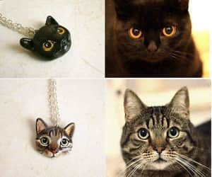 Animales, cat, and diy image