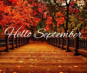 autumn, fall, and fall inspo image