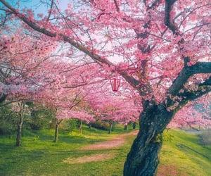amazing, rosado, and beautiful image