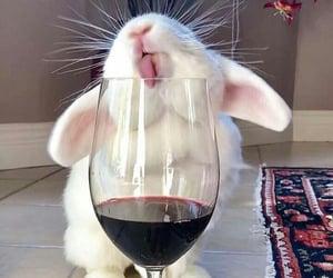 animal, love, and rabbit image