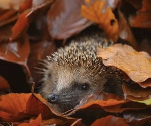 autumn, leaves, and animal image