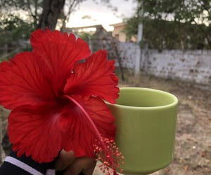 autoral, flowers, and photography image