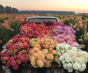 aesthetic, природа, and beautiful image