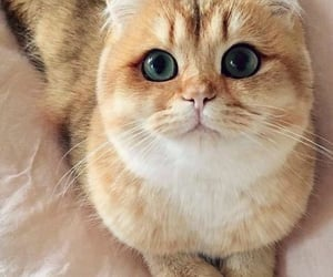 animals, lovely, and pets image