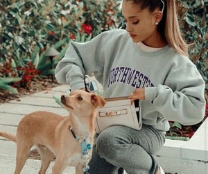 celebrity, dog, and pretty image